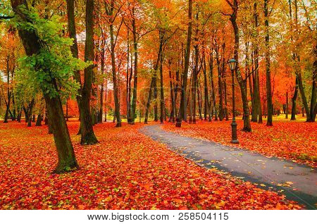 Fall landscape with colorful fall trees and yellow fallen leaves. Fall deserted alley in the fall city park. Fall leaves in the park, fall landscape scene