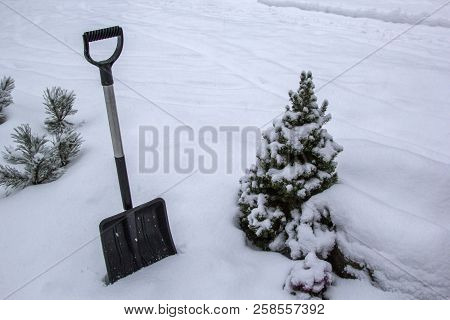 Black Shovel On White Snow To Remove Snow In Winter Garden / Forest With Decorative Fir Tree, Pine T
