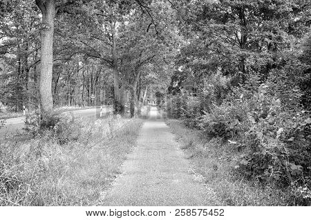 Sideway Of Countryside Road In Summer Nature. Footpath With Green Trees And Grass On Sides. Directio