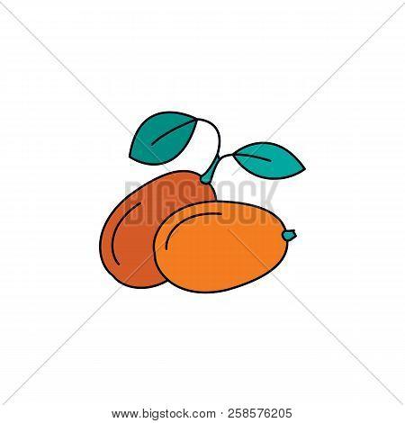 Kumquat Icon. Cartoon Kumquat Vector Icon For Web Design Isolated On White Background