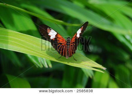Butterfly World 177