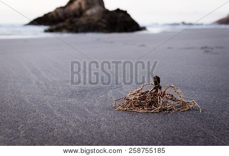 Etail Of The Beach Of Bayas, With Remains Of Seaweed In The Foreground, In Asturias, Spain.
