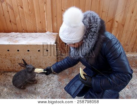 Omsk Region, Russia - February 2015: Woman Feeding Rabbit In The Zoo Holiday Village