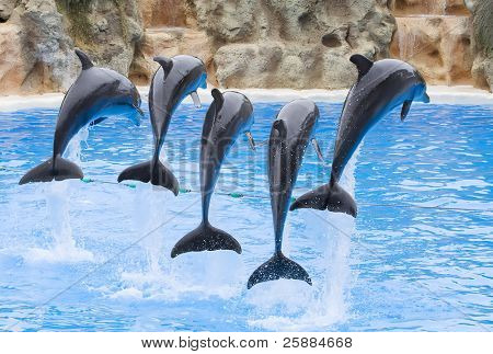 Bottlenose Dolphins leaping over a rope