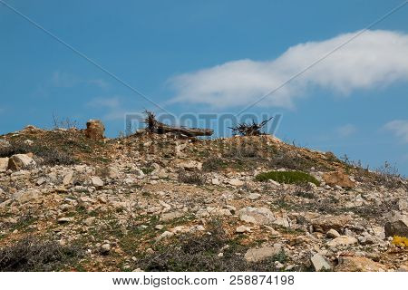 Detail Of A Top Of A Hill With Many Stones A Rocks, Little Grash And Small Bushes. Tree Trunks With