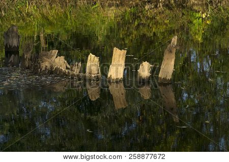 Autumn River With The Remains Of Old Wooden Piles Sticking Out Of The Water Against The Background O