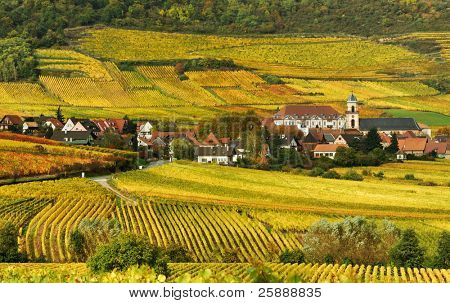 Autumn Vineyard in France
