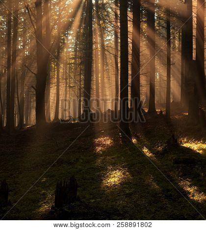 Beutiful Morning Sun Rays In Foggy Woods