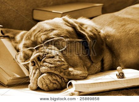 Tired Dog Sleeping at her Lessons in Sepia Tone