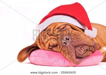 Santa Dog is Dreaming of Christmas