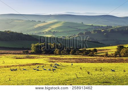 Scenic Green Hills In Morning Light With Grazing Sheep On Fresh Green Grass. Shropshire Hills In Uni