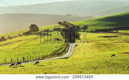 Narrow Asphalt Road Across Green Hills With Grazing Sheep In Light Of Rising Sun. Shropshire Hills I