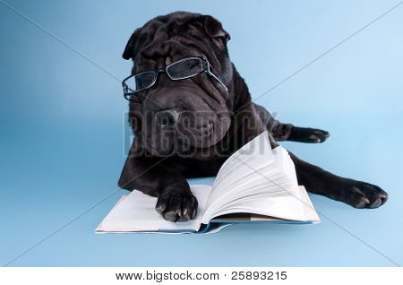 Sharpei dog is dreaming over a book