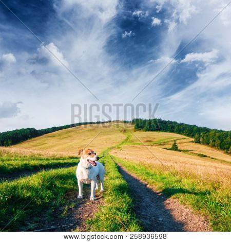 Alone white dog on mountains road against the backdrop of an incredible mountain landscape. Travel concept
