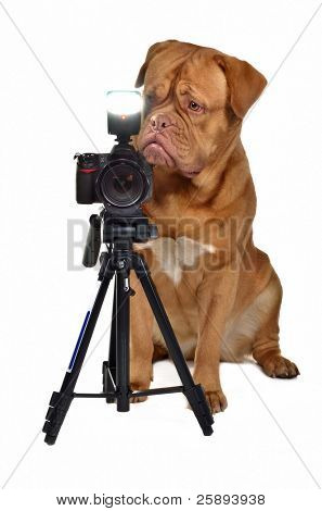 Photographer dog with camera, isolated