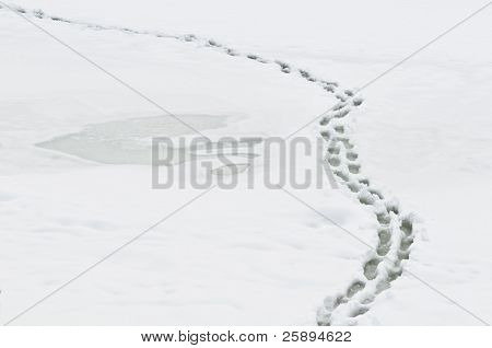 Winter path with human steps on shining snow