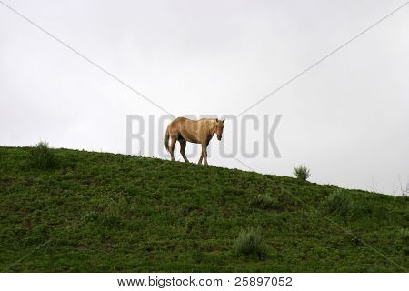 a lone horse stands on a green hill poster