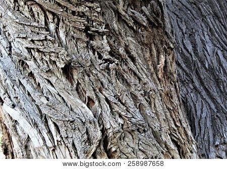 Gnarled Bark On An Old Tree Twists In A Distinct Pattern.