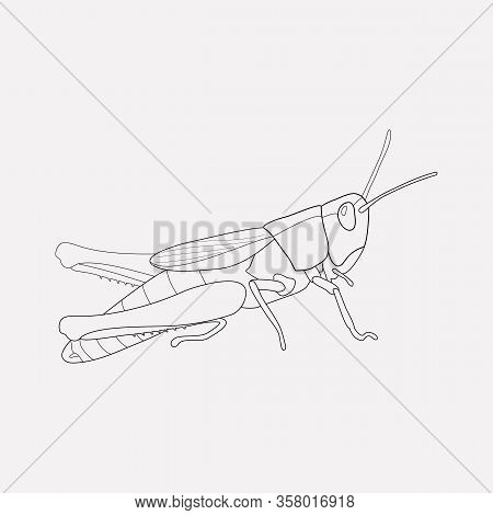 Grasshopper Icon Line Element. Vector Illustration Of Grasshopper Icon Line Isolated On Clean Backgr