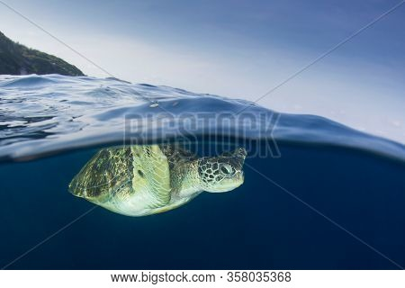 Green Sea Turtle half and half split photo with tropical island