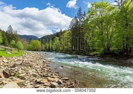 Mountain River Among The Forest In Spring. Trees, Grass And Stoner On The Shore. Beautiful Nature La