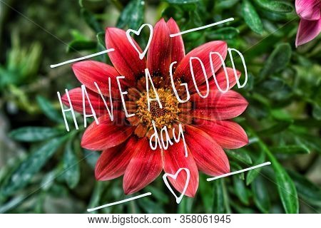 Have A Great Day Wishing Message. The Have A Good Day Text Is In Front Of A Beautiful Red Flower Bac