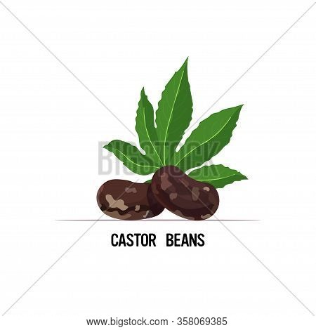 Castor Beans With Leaf Organic Healthy Vegetarian Food Isolated On White Background Vector Illustrat