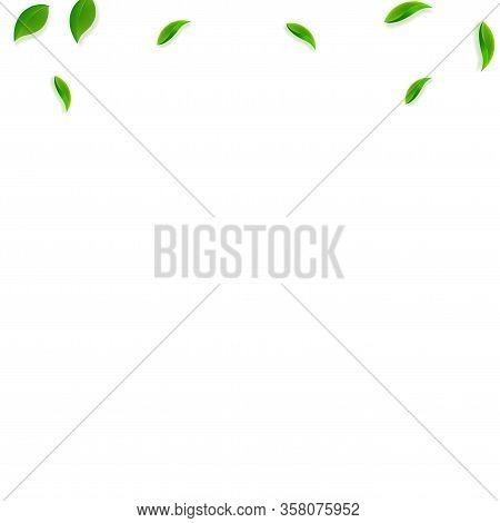 Falling Green Leaves. Fresh Tea Random Leaves Flying. Spring Foliage Dancing On White Background. Al