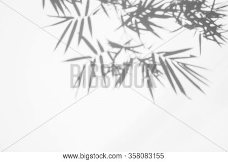 Shadows Of Bamboo Leaf On White Wall Concrete Surface Texture Background. White And Black Tone