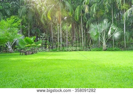 Fresh Green Carpet Grass Yard, Smooth Lawn In A Beautiful Palm Trees Garden And Good Care Landscapin