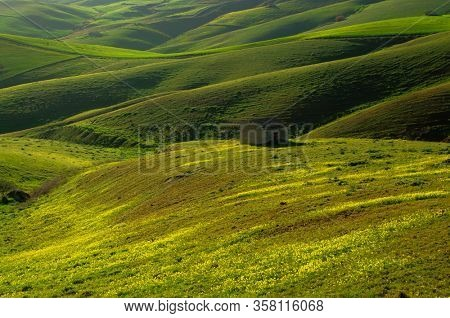 rolling hills covered with green wheat fields at evening in Sicily