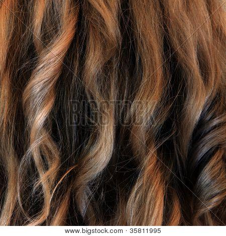 Tint fair hair closeup