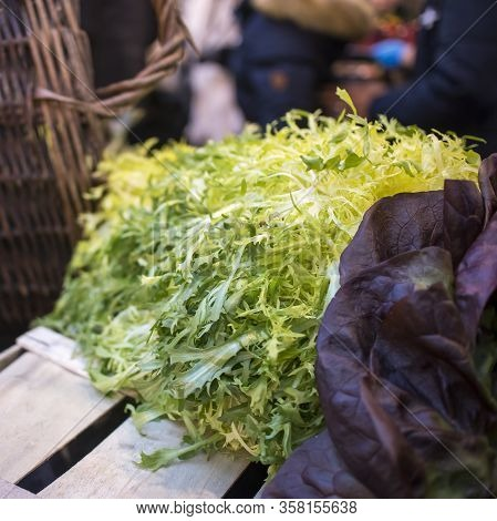 Frisee Salad With Red Oak Lettuce On The Stall At A Farmer Market