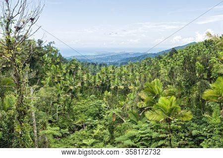 Tropical Rainforest Of El Yunque And Atlantic Coast Of Puerto Rico