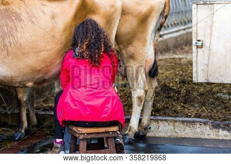 Alajuela, Costa Rica - January 20 2020: Woman Milking A Cow By Hand At Corso Lecheria In Costa Rica