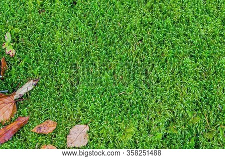 Natural Background. Moss
