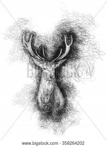 Pen Pencil Sketch Scribble Drawing Of Deer Cervidae Portrait