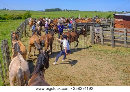 Caminos, Canelones, Uruguay, Oct 7, 2018: Gauchos Trying Try To Tame Horses At A Criolla Festival In