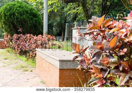 Park Bench In Sitting Lawn Of Front Or Back Yard Garden Of A Residential Building. Looking Through U