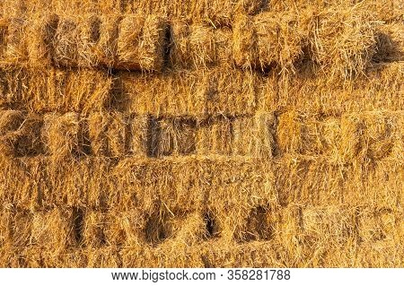 Yellow Hay Texture Background From Dry Rice After Harvest In Thailand