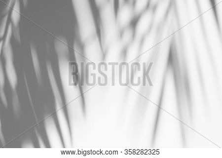 Abstract Background Of Shadows Palm Leaf Is Tropical Leaves On A White Wall. White And Black.