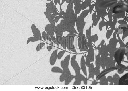 Abstract Of Shadows Leaf On White Wall Background