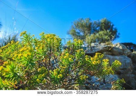 Rocky Hill At Parc Natural De La Peninsula De Llevant On The Island Of Mallorca, Spain