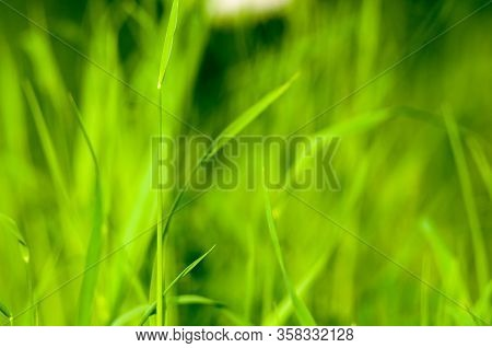 Spring Or Summer Natural Abstract Background With Grass In The Garden