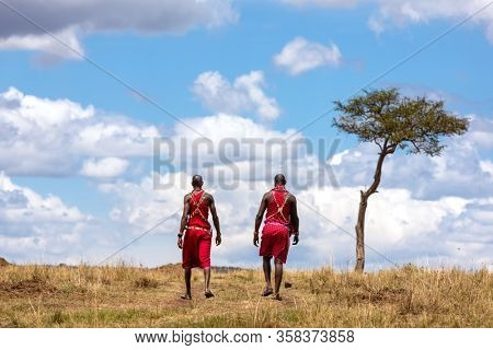 Two Maasai tribesmen walking through the grasslands of the Masai Mara. The men are dressed in traditional tribal clothing. Cloudscape with acacia tree on the horizon.