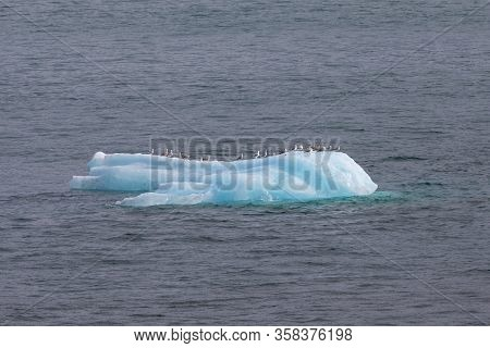 Iceberg Floating In The Waters Near Dawes Glacier, Endicott Arm, Alaska. Seagulls Sitting On The Ice