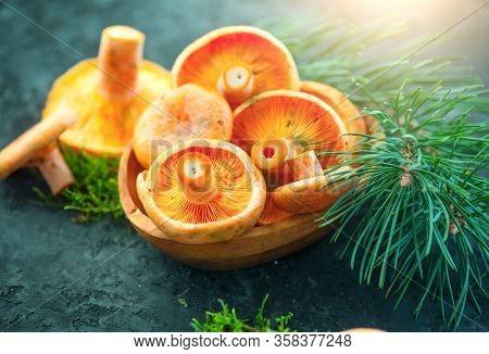 Raw wild Saffron milk cap mushrooms on dark old rustic background. Lactarius deliciosus, Rovellons, Niscalos mushroom closeup. Organic Fresh ceps. Soft focus.