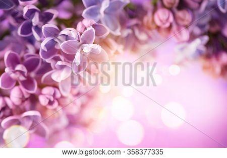 Lilac flowers bunch violet art design background. Beautiful violet color Lilac flower frame closeup. Watercolor nature floral backdrop. Easter, Birthday, Nature border design