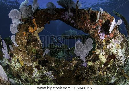 Coral covered shipwreck in Key Largo, Florida