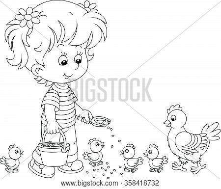 Little Girl Farmer Standing With A Bucket Of Feed Grain And Feeding A Merry Brood Of Small Chicks An